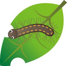 毛虫には注意。
