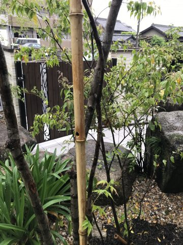 竹 穴 虫 刺す タイワンクマバチ