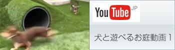 犬と遊べるお庭動画1