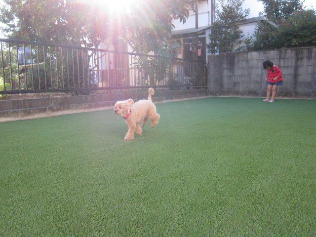 愛犬と遊べるお庭完成 春日井