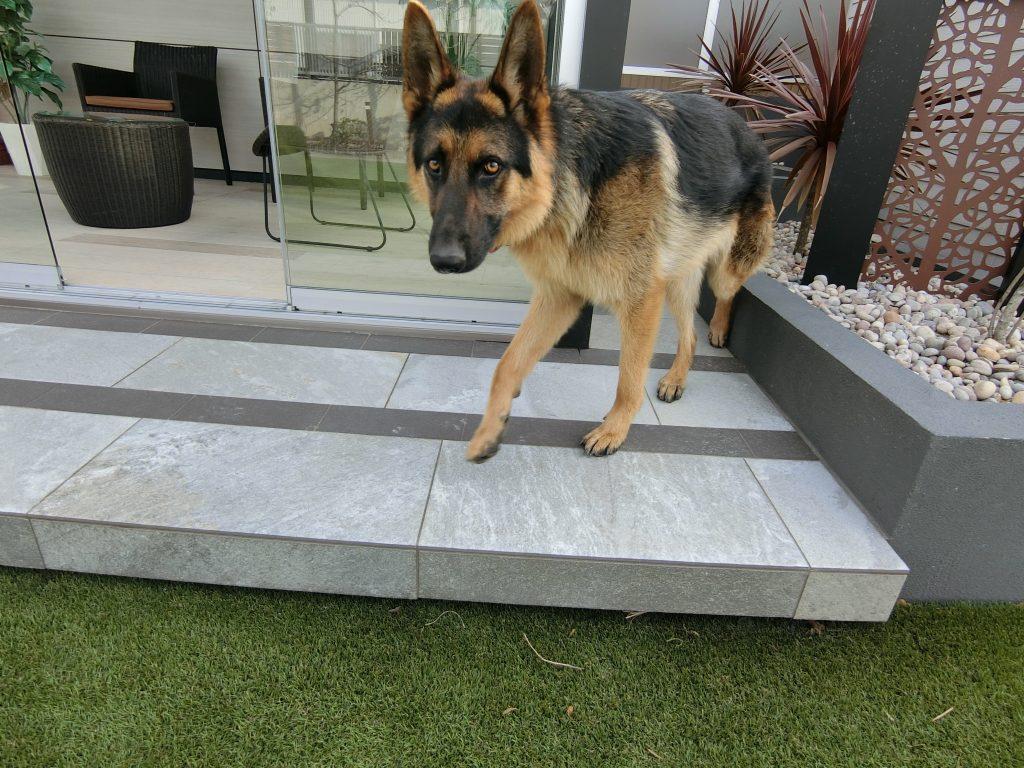 ドックガーデン(犬の庭)体験・見学会!⑪大型犬~シェパード&ラブ(パピー)