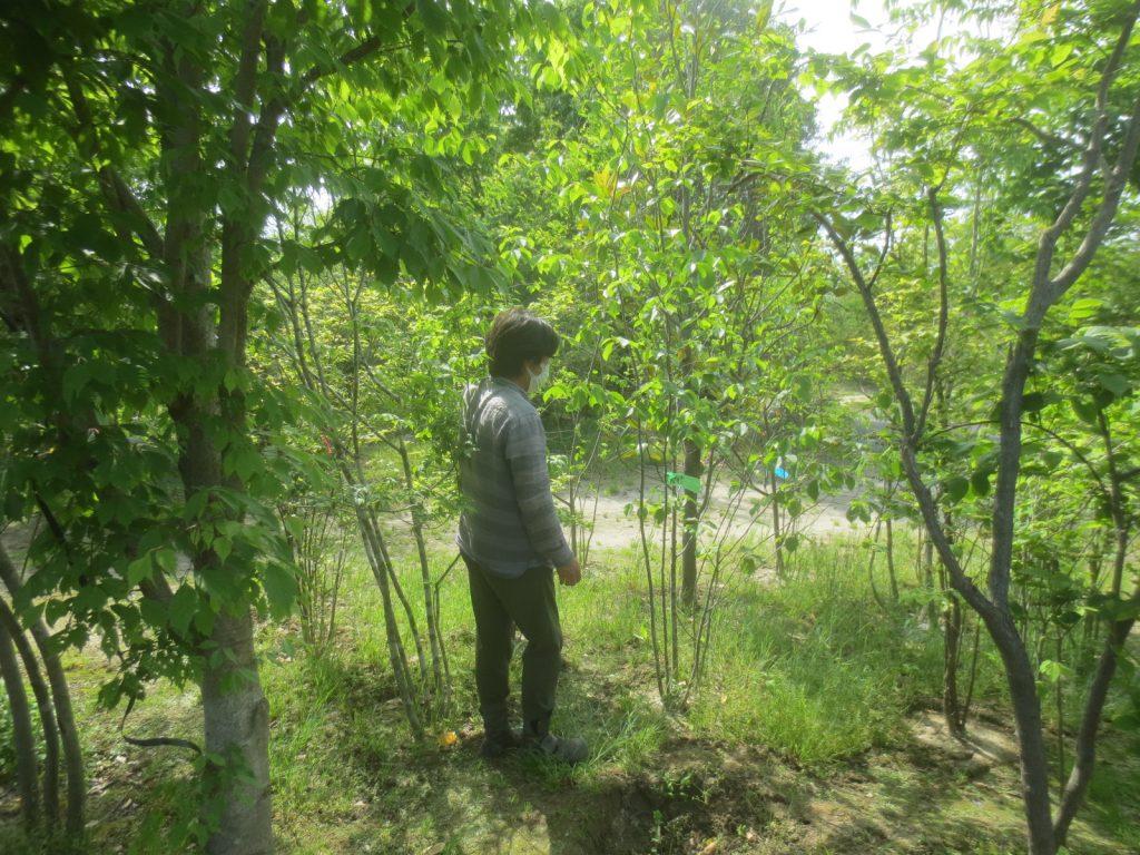 庭木を求めて・・・