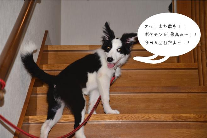 犬と住まいる協会 in 新宿